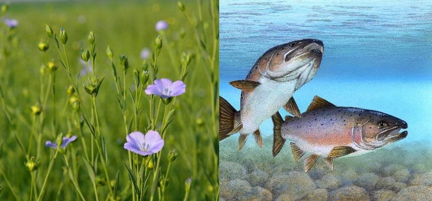 Fischöl-oder-Pflanzenöl