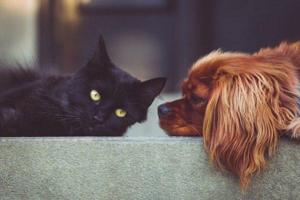 Hund-Katze-Haustiere-Fischöl-min